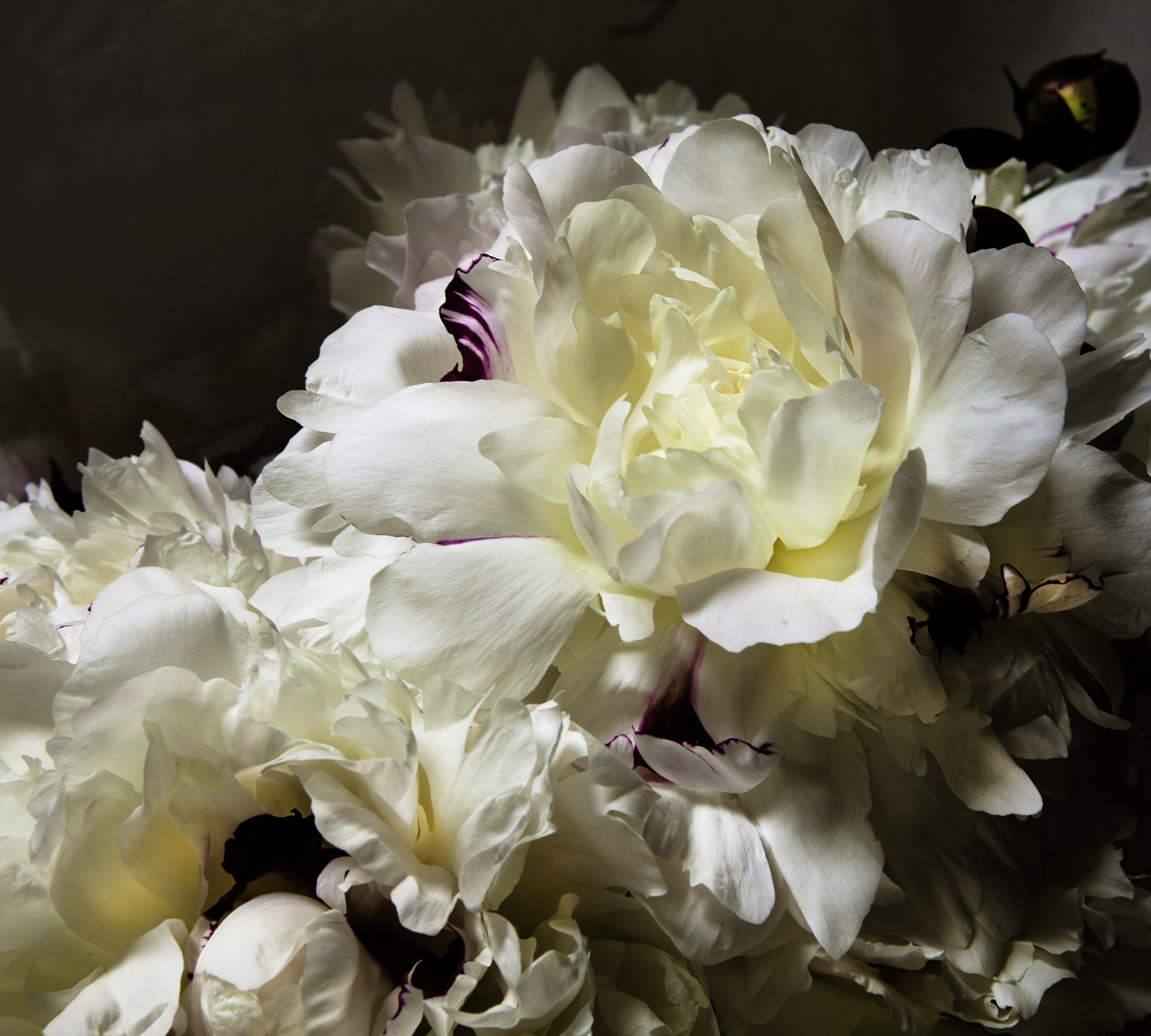 Bloom Power