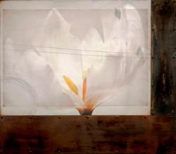 Sketch-Upon-a-Tulip