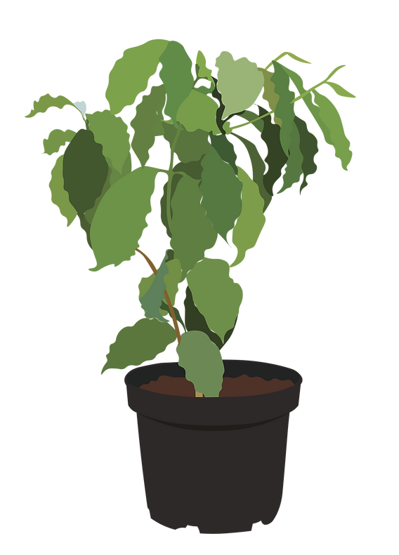 coffee plant-10.png
