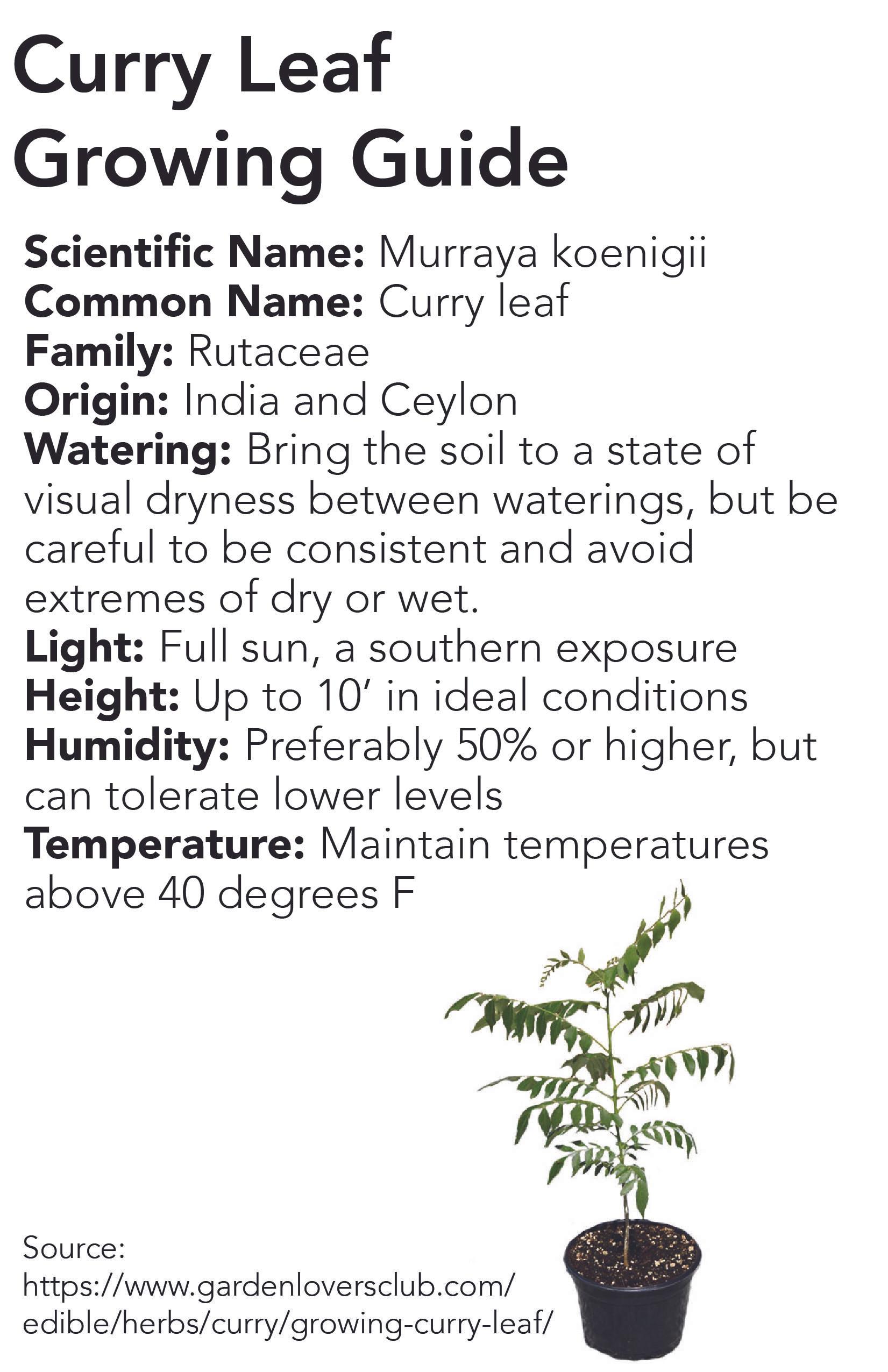 plant-info-10 copy.jpg