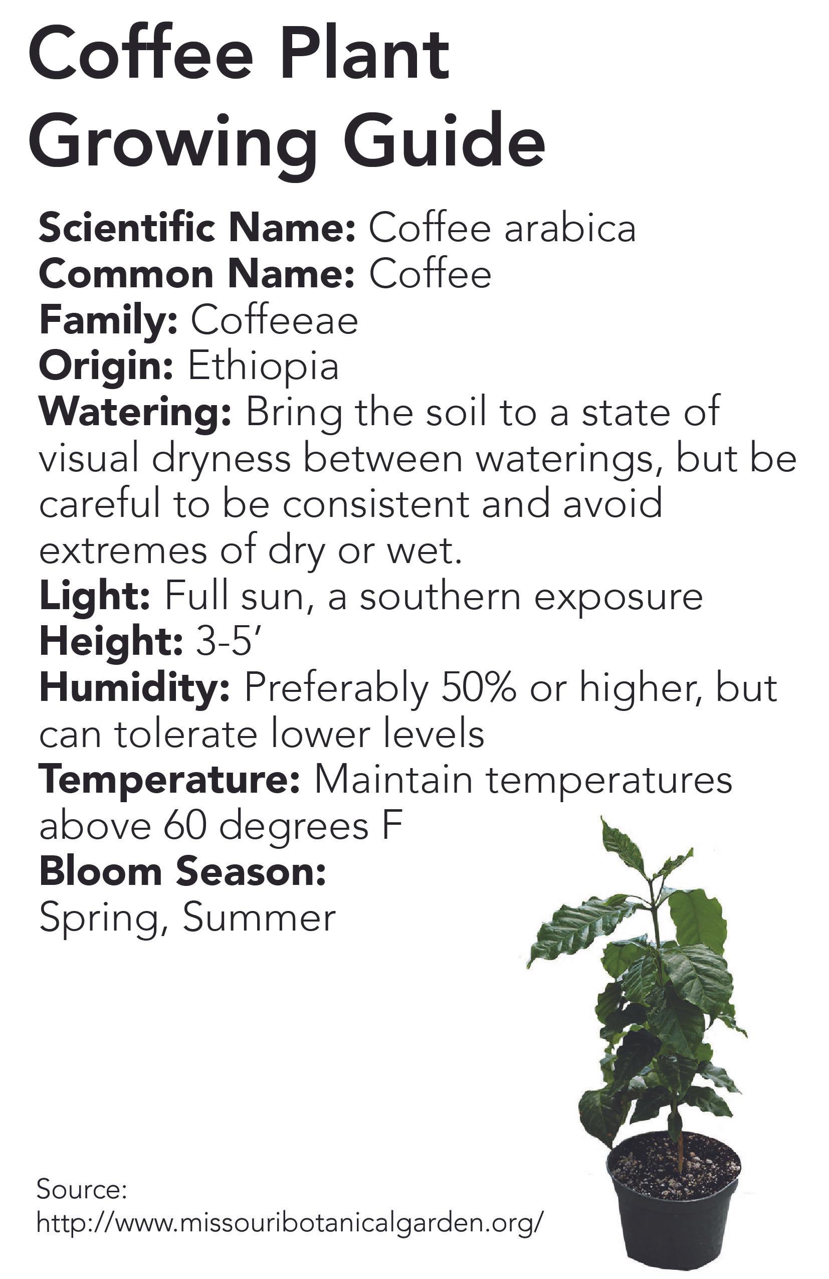 plant-info-11 copy.jpg