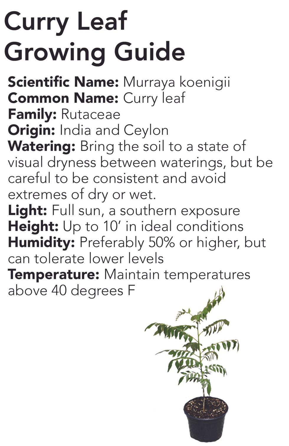 Curry Leaf Growing Guide