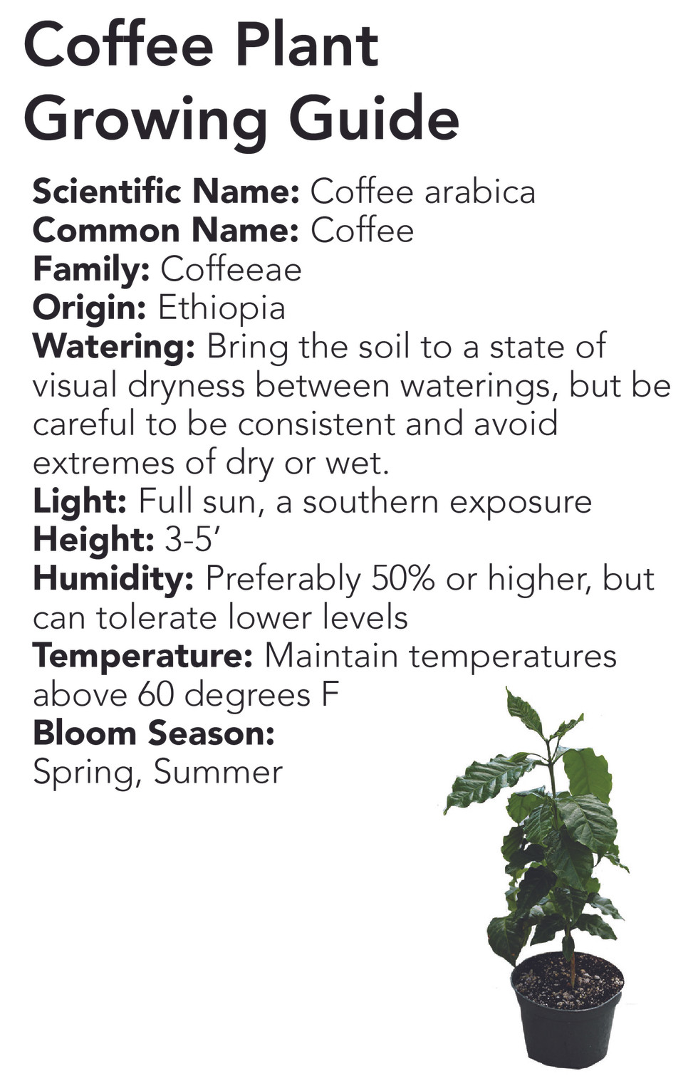 Coffee Plant Growing Guide