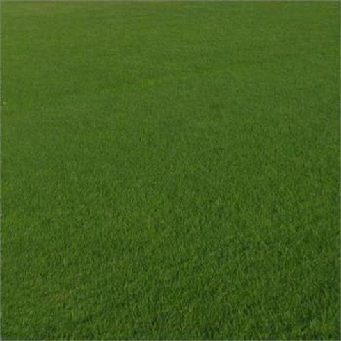 General Sport Grass Seed Mix