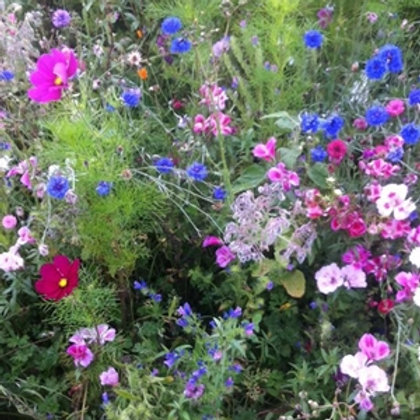 WWF The Bees Knees Wildflower Seed Mix 100%