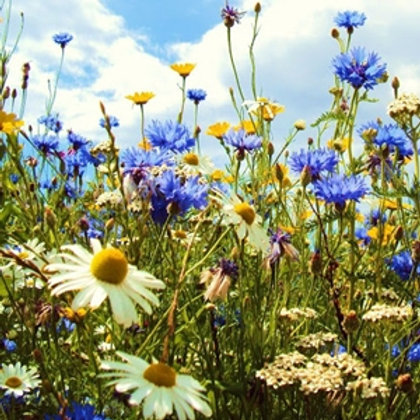 Premium Wildflower & Grass Seed Mix 80:20