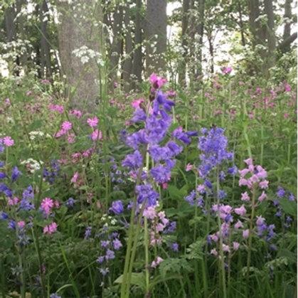 Woodland & Heavy Shade Wildflower & Grass Seed Mix