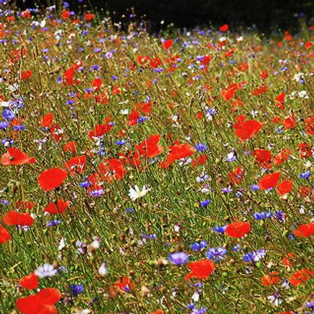 Jubilee / Centenary Wildflower Seed Mix 100%