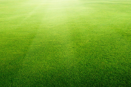 Turf Perennial Greens Grass Seed Mix