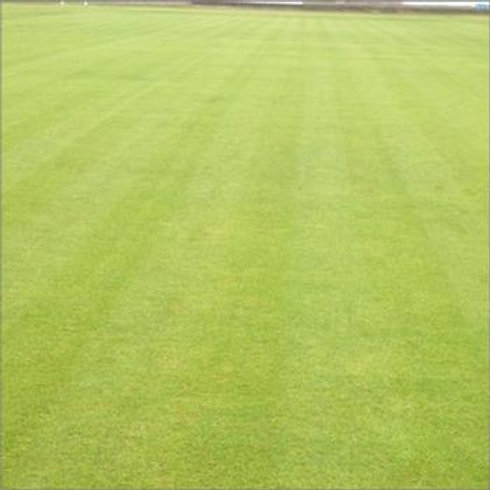 General Outfield Pitch Grass Seed Mix