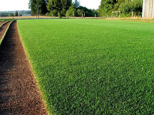 Ultimate Turf Grass Seed Mix