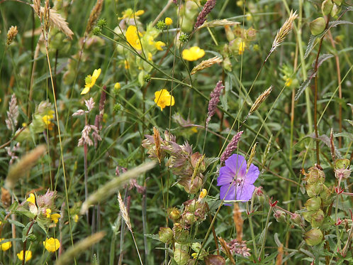 Water Margins Wildflower & Grass Seed Mix 80:20