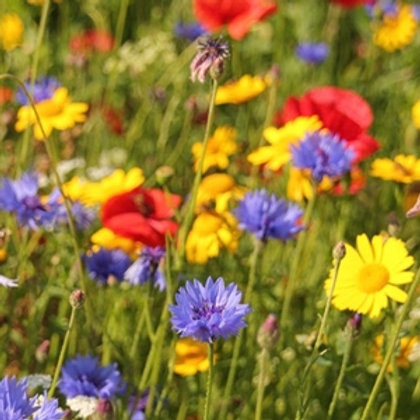 Cornfield Annual Wildflower Seed Mix 100%