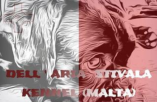 Dell'Aria Stivala Kennel (Malta), Stivala Photography, Puppies, Puppy, Kennel, Boxer, Malta, Breed, Photographer