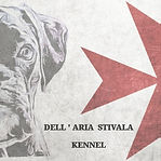 kennel, dogs, puppies, boxer, breed, malta