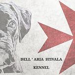 Puppy, Puppies, Litter, Toya Del Quarzo Nero, Dell'Aria Stivala Kennel (Malta), Dogs, Pedigree, Boxer, Breed, Stivala Photography, Photographer, Photography, Malta