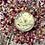 Thumbnail: Alaea Scrub Butter