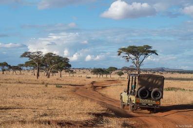 Jeep driving on safari in Africa