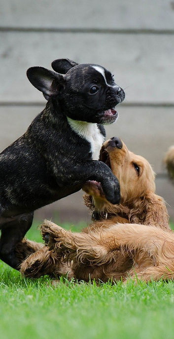 playing-puppies-790638_1920_edited.jpg