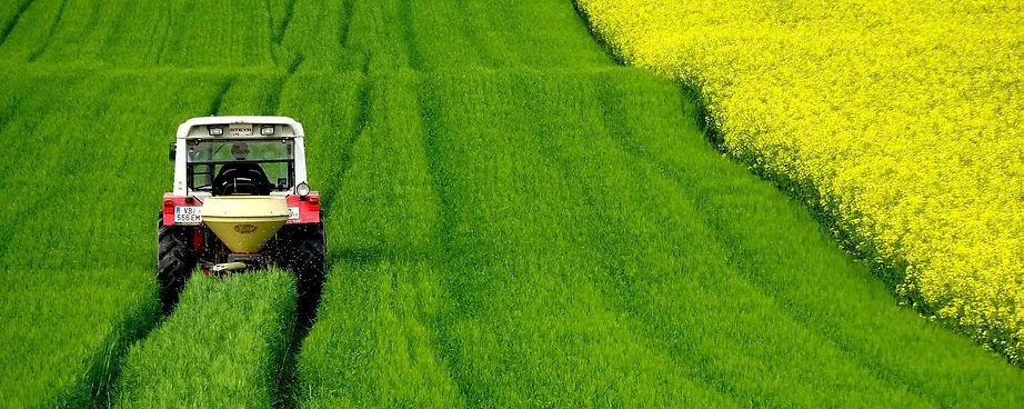 field-of-rapeseeds-4910374_1920.jpg