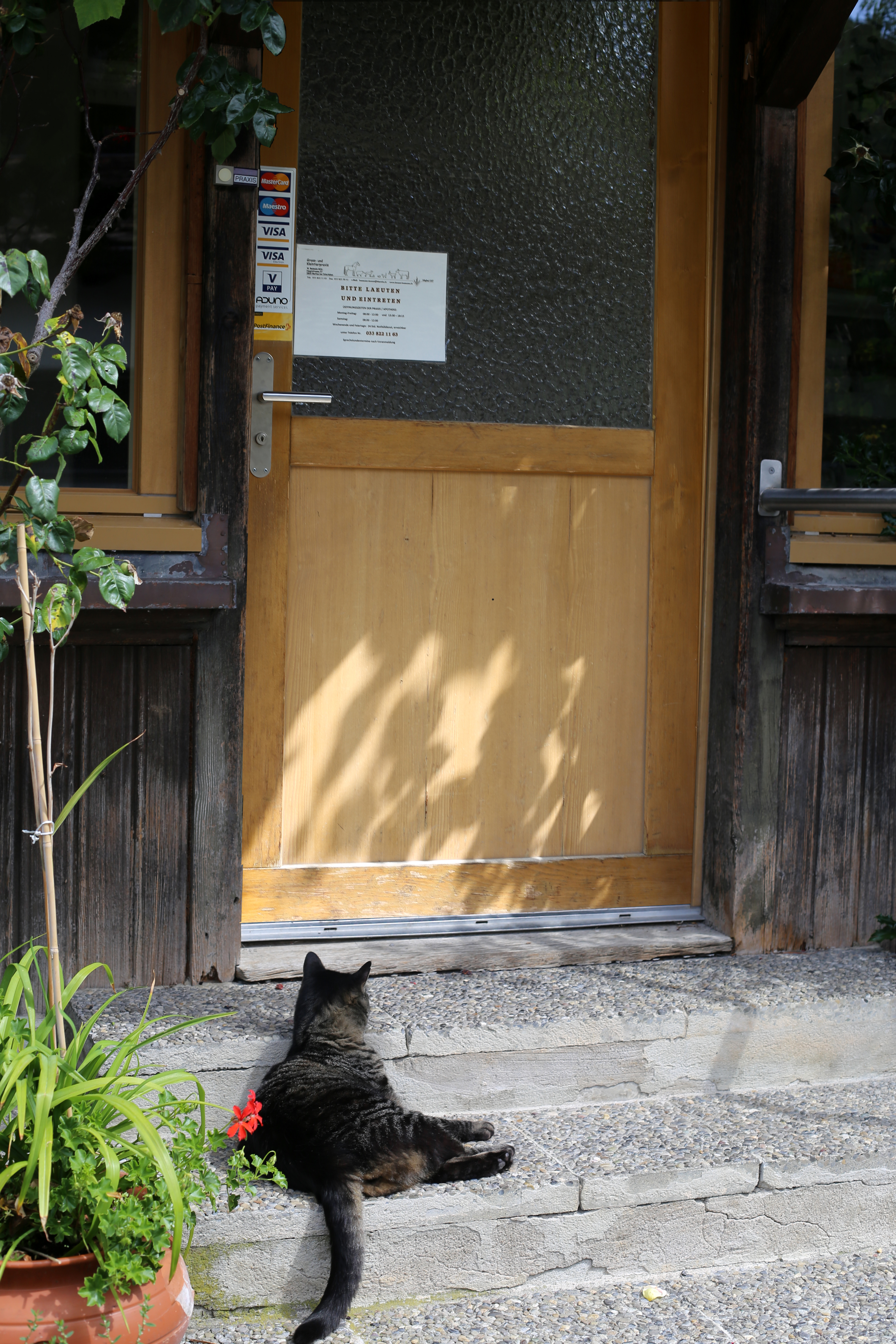 Katze vor Praxiseingang