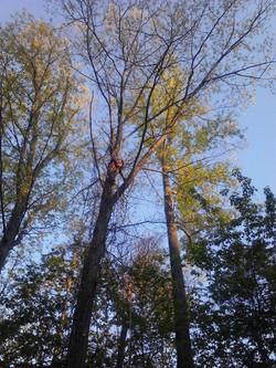 Orion Tree Photo