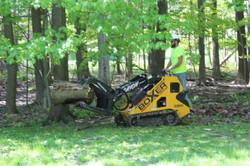Orion Tree Service Boxer