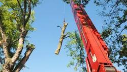 Orion Tree Crane