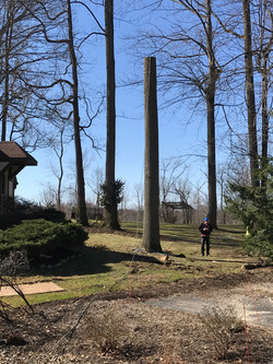 Tree Removal From Top