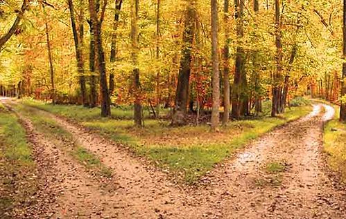 autumn fork in the road.png