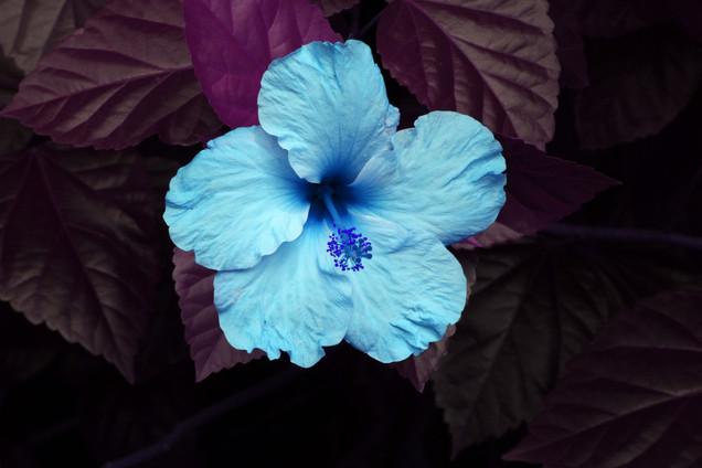 Floresencia.jpg