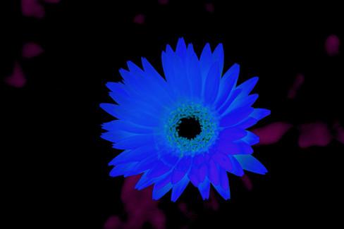 Yerbera in blue.jpg
