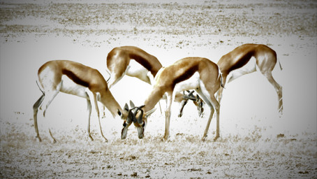 InsideOut Adventures: Namibia – past, present and future
