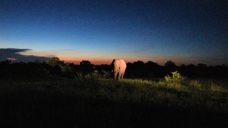 Our InsideOut Adventures - Kruger: Satara and Surrounds