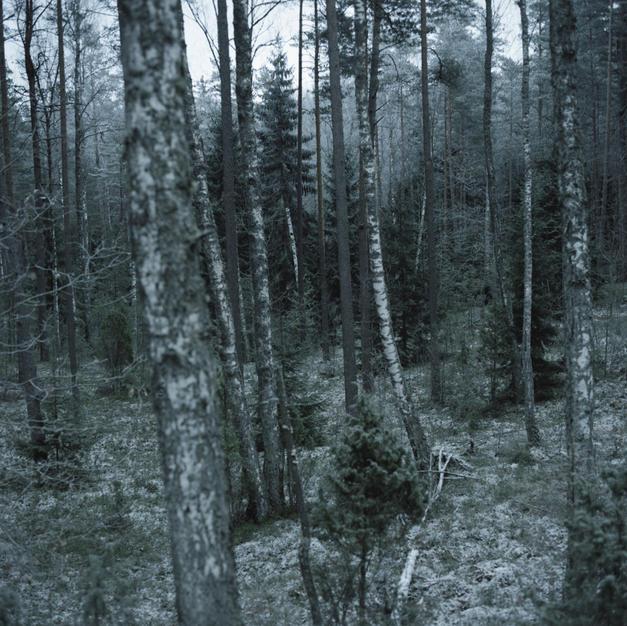 Forest - 250 EUR