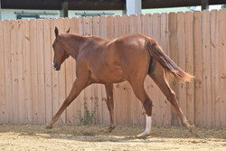 Yearling Picture