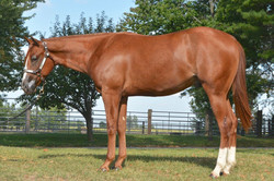 Yearling Sale Photo
