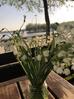 Primăvara în Delta Dunării!