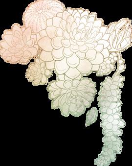 Vector Illustration - Succulents
