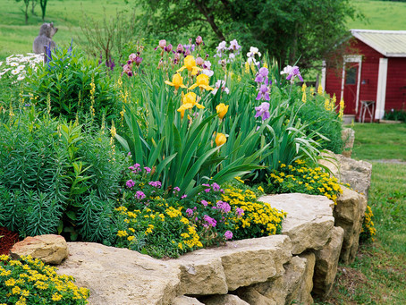 7 of the Most Common Perennial Garden Mistakes to Avoid