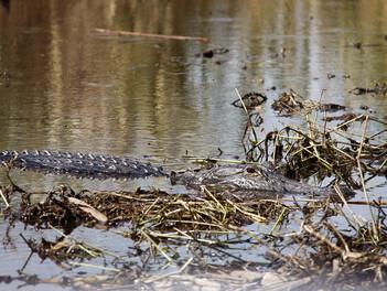 Parque Nacional Evereglade: La vida del pantano