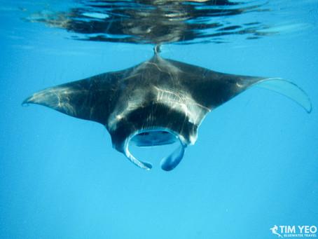 Spotlight on the Maldives | Scuba Diving Blog