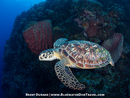 Bunaken and the Colorful Underwater Life | Scuba Diving Blog