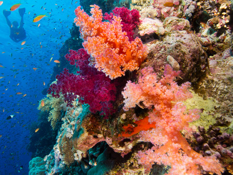 Spotlight on the Red Sea | Scuba Diving Blog