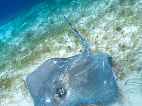 Cayman Islands Top Marine Life Encounters   Scuba Diving Blog