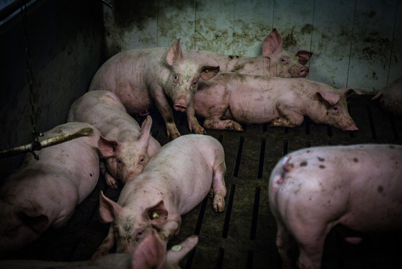 Schweineproduktion-41.jpg