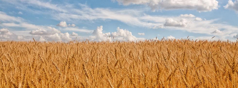wheat_strip_narrow.jpg