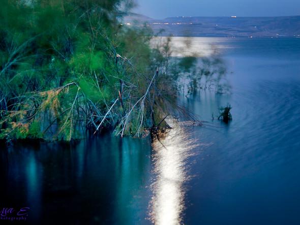 moon light on the water #1