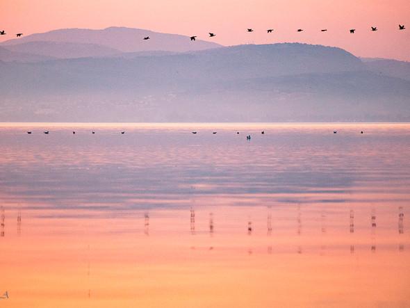 cormorants in line #2 קורמורנים בשורות