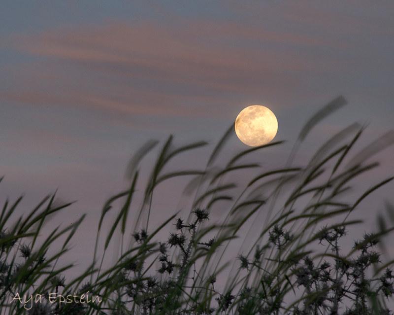 Full Moon אפריל 2020